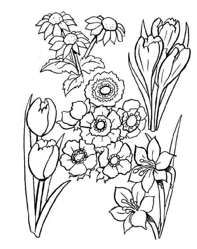 Coloriage fleurs cultivées