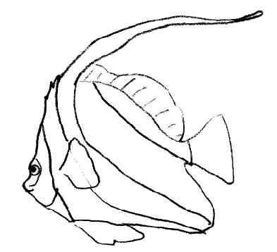 Coloriages poissons - Dessins de poissons de mer ...