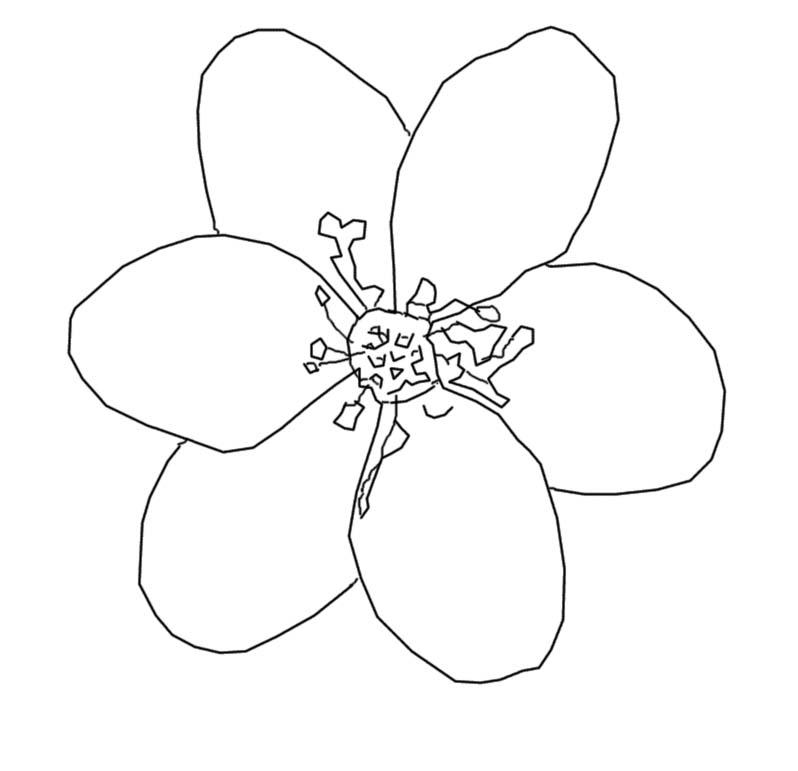 Coloriage fleur an mone h patique - Comment dessiner une fleur ...