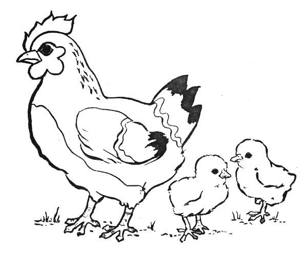 Coloriages animaux de ferme - Dessin de poules ...